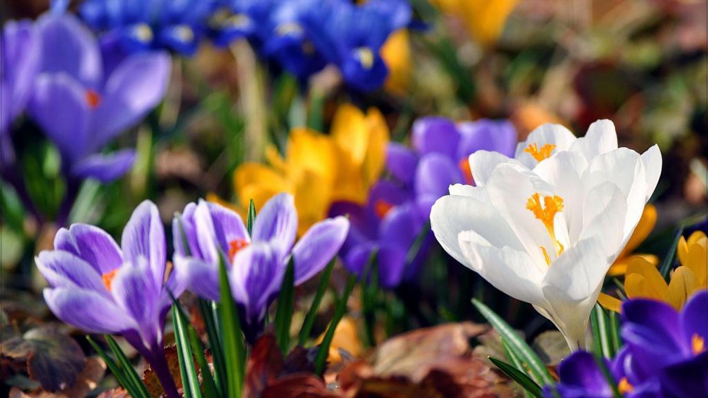 картинки на экран рабочего стола весна № 478062 бесплатно