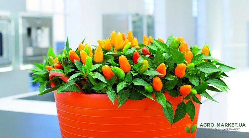 экзотические комнатные цветы из семян