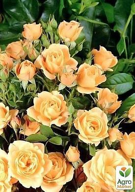 Купить цветы в перми по оптовым ценам